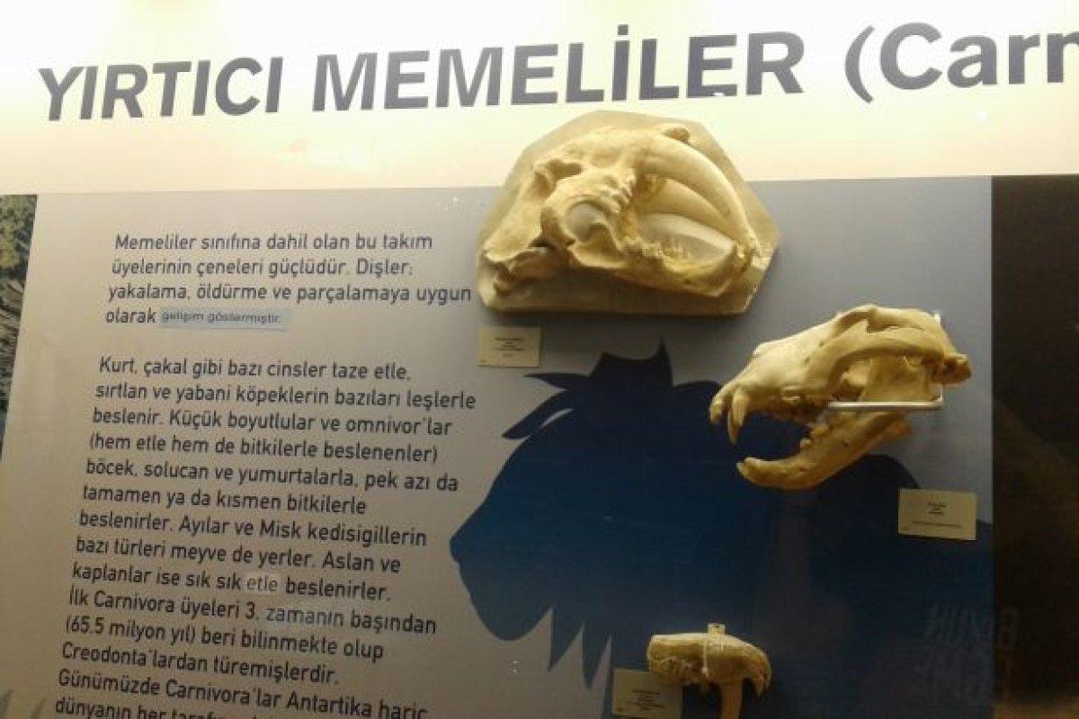MTA Müzesi'nde Bir 'evrim' Sansürü Skandalı Daha: Üzerini Bantlamışlar!